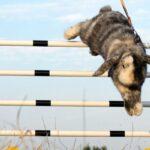 Train jouw konijn met deze prachtige hindernisbaan van de Lidl