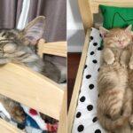 IKEA verkoopt nu kattenbedjes en de katjes vinden het HEERLIJK