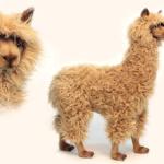 """Alpaca fans opgelet: Bol verkoopt levensgrote """"berijdbare"""" Alpaca's voor in huis!"""